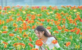 长沙县:十万株太阳花盛放成花海