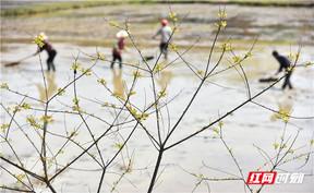 衡東:保育秧 治拋荒 確保糧食生產