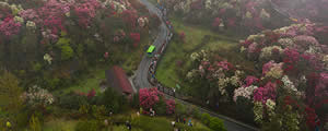 这就是一路生花!贵州百里杜鹃花海惊艳世界