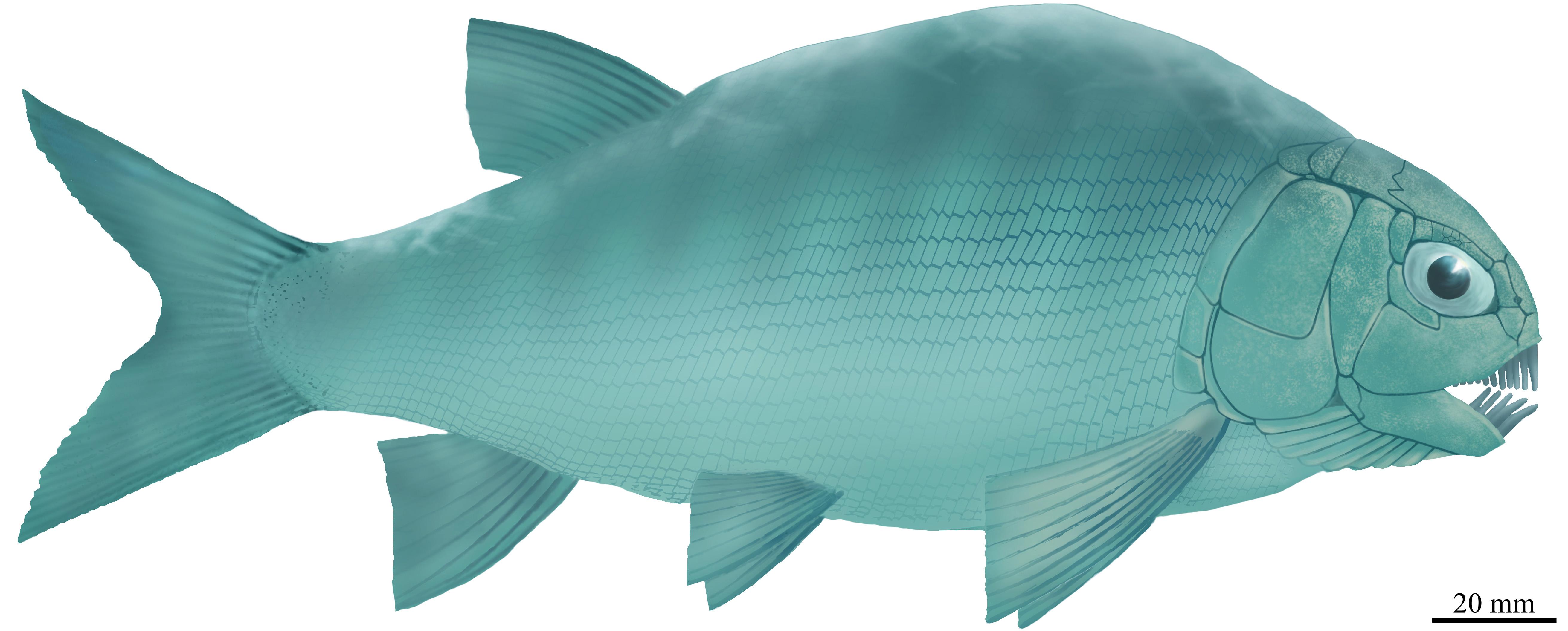 盘州暴鱼复原图