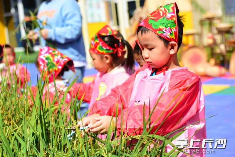 """芙蓉区教育局万国城幼儿园开展""""自然教育,注重课程与日常活动、劳动教育、传统文化相结合。通过""""玩""""""""说""""""""记""""""""展""""四个途径将幼儿3-6岁年龄阶段能力目标和领域发展结合开展深入研究,促进幼儿全面发展。幼儿园供图"""