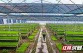 喜讯:华容稻评为国家农产品地理标志产品