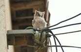 国网岳阳供电公司成功救助国家二级保护动物领角鸮