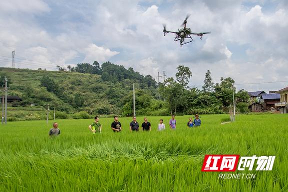 组图丨泸溪县开展优质稻生产技术培训