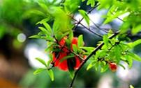 最美阳台丨万物有灵,每一种花木都有着自己的情思
