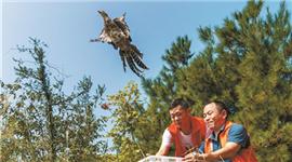 南岳120只珍稀雉类放归自然
