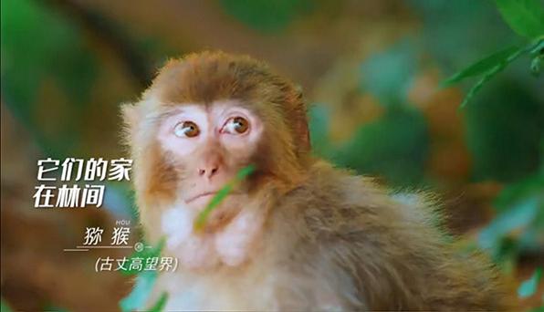 视频丨神奇动植物在哪里?就在湖南!